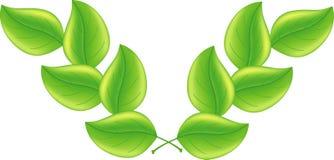 Priorità bassa verde del foglio Immagini Stock