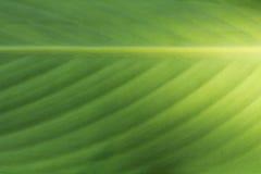 Priorità bassa verde del foglio Immagine Stock