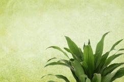 Priorità bassa verde dell'annata con la pianta Immagini Stock