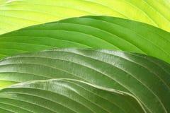 Priorità bassa verde dell'estratto del foglio Fotografie Stock
