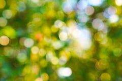 Priorità bassa verde dell'indicatore luminoso dell'estratto del bokeh immagini stock