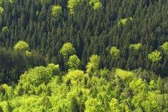 Priorità bassa verde della foresta degli alberi Fotografie Stock