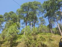 Priorità bassa verde della natura Immagini Stock