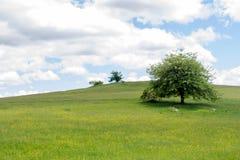 Priorità bassa verde della sorgente Progettazione di arte del cloudscape e dell'erba Concetto environmetal del paesaggio di estat Fotografie Stock Libere da Diritti
