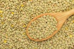 Priorità bassa verde delle lenticchie Fotografia Stock