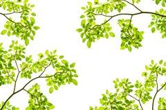 Priorità bassa verde di permesso Immagine Stock