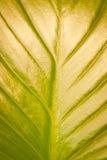 Priorità bassa verde di struttura del foglio Fotografie Stock