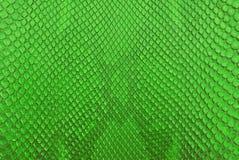 Priorità bassa verde di struttura della pelle dello spuntino del pitone. Fotografia Stock Libera da Diritti