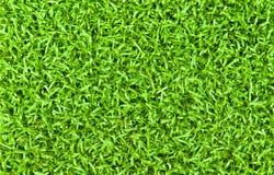 Priorità bassa verde intenso dell'erba Fotografia Stock