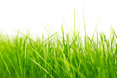Priorità bassa verde naturale Immagine Stock Libera da Diritti