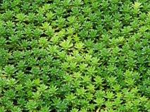Priorità bassa verde naturale Fotografia Stock