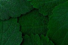Priorità bassa verde scuro dei fogli Fine in su immagini stock libere da diritti