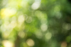 Priorità bassa verde vaga Fotografie Stock