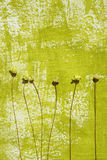 Priorità bassa verniciata e fiori secchi Fotografia Stock