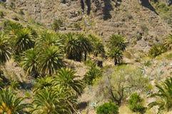 Priorità bassa vulcanica di paesaggio con gli palma-alberi Immagini Stock