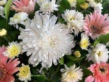 Priorit? bassa astratta dei fiori fotografia stock libera da diritti