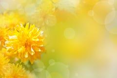 Priorità bassa con i fiori gialli Fotografia Stock Libera da Diritti