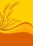 Priorità bassa con il raccolto del cereale Fotografie Stock Libere da Diritti