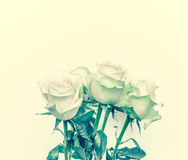 Priorità bassa con le rose bianche Immagine Stock Libera da Diritti
