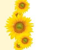 Priorità bassa del fiore, estate o tema gialla della sorgente Fotografia Stock