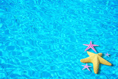 Priorità bassa dell'acqua con le stelle marine Fotografie Stock Libere da Diritti