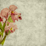Priorità bassa dell'album del fiore dell'annata Immagini Stock Libere da Diritti