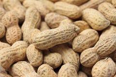 Priorità bassa dell'arachide Fotografia Stock Libera da Diritti