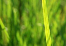 Priorità bassa dell'erba verde Immagini Stock