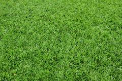 Priorità bassa dell'erba verde Fotografia Stock Libera da Diritti