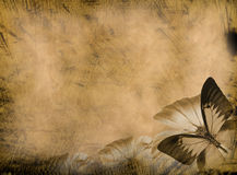 Priorità bassa della farfalla di Grunge Fotografia Stock