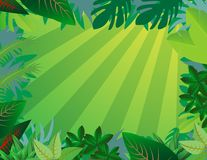 Priorità bassa della foresta della giungla Immagini Stock Libere da Diritti