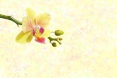 Priorità bassa della sorgente con un'orchidea Fotografia Stock Libera da Diritti