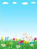 Priorità bassa della sorgente e di Pasqua Fotografie Stock