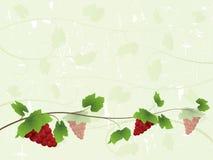 Priorità bassa della vite con l'uva rossa Immagini Stock Libere da Diritti