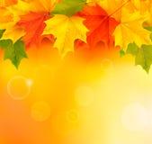 Priorità bassa di autunno con i fogli di nuovo al banco Immagine Stock