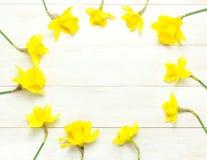 Priorit? bassa floreale della sorgente Pagina dei fiori del narciso o del narciso sulla disposizione piana di legno bianca di vis fotografia stock