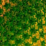 Priorità bassa geometrica verde astratta Art Pattern Illustration Forme decorative del favo Bei ambiti di provenienza della sorge Fotografie Stock Libere da Diritti