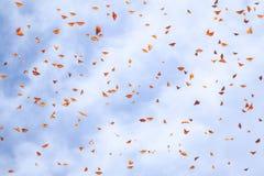 Priorit? bassa naturale di estate Molte farfalle arancio del monarca in un cielo blu con le nuvole fotografia stock libera da diritti