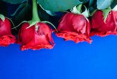 Priorit? bassa rossa delle rose fotografia stock