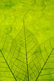 Priorità bassa verde Immagini Stock