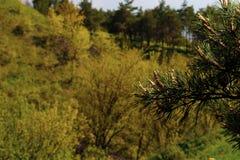 Priorit? bassa verde della natura Ramo di albero nella priorità alta a destra immagini stock