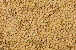 Priorit? bassa verde di struttura delle lenticchie nutrizione bio- Ingrediente di alimento naturale immagini stock