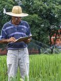 Researcher in plots with sugar cane. Priracicaba, Sao Paulo, Brazil, January 12, 2005. Researcher analyzes plots with sugarcane experiments within the Genetic Royalty Free Stock Image