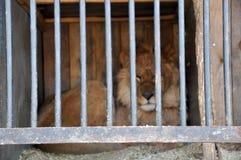Prisão da cadeia do leão do tigre da gaiola da pilha dos animais do jardim zoológico Fotografia de Stock