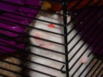Prisão do animal de estimação imagem de stock