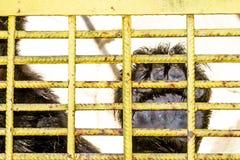 Prisão dos animais Foto de Stock