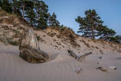 Pris par le sable et le temps Image libre de droits