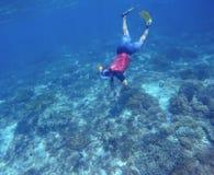 Prise d'air dans des bains jaunes d'ailerons sous-marins Découverte de nature tropicale images stock