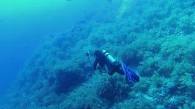 prise d'illustrations de plongeur banque de vidéos