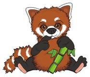 Prise de panda rouge un aliment Photographie stock